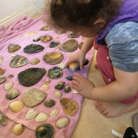 cleaning shells2